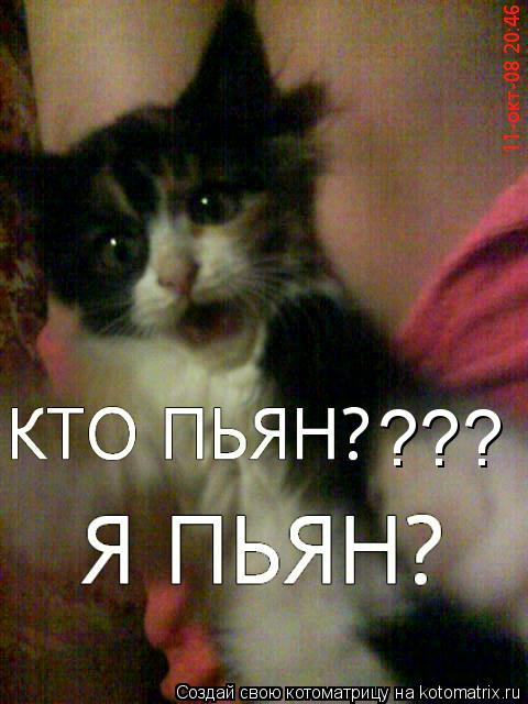 Котоматрица: ???