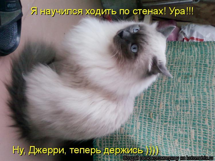 Котоматрица: Я научился ходить по стенах! Ура!!! Ну, Джерри, теперь держись ))))