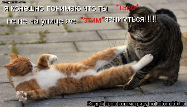 Котоматрица: я конешно понимаю что ты *таво* не не на улице же  *этим* занимться!!!!!
