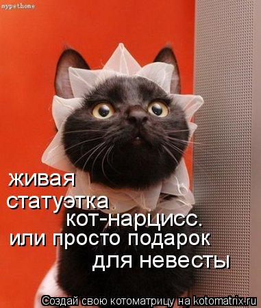 Котоматрица: статуэтка кот-нарцисс. или просто подарок живая для невесты