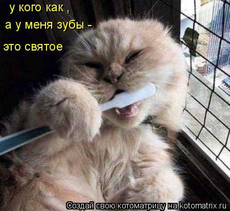 Котоматрица: у кого как , а у меня зубы -  это святое