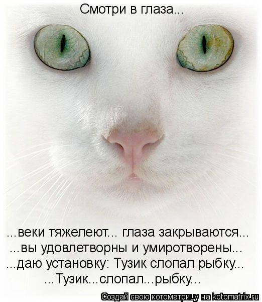 Котоматрица: Смотри в глаза... ...веки тяжелеют... глаза закрываются... ...вы удовлетворны и умиротворены... ...даю установку: Тузик слопал рыбку... ...Тузик...сло