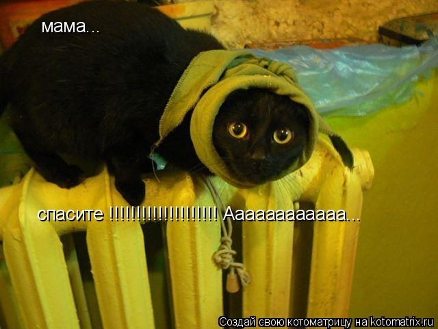Котоматрица: спасите !!!!!!!!!!!!!!!!!!!! Аааааааааааа... мама...