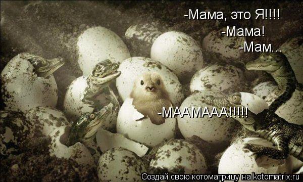 Котоматрица: -Мама, это Я!!!! -Мама! -Мам... -МААМААА!!!!!