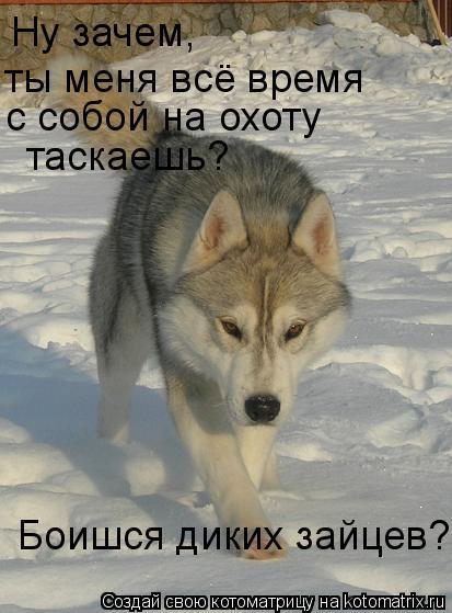Котоматрица: Ну зачем, ты меня всё время с собой на охоту  таскаешь? Боишся диких зайцев?