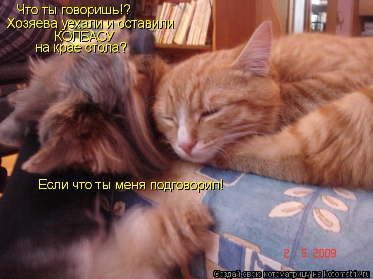 Котоматрица: Что ты говоришь!? Хозяева уехали и оставили  КОЛБАСУ на крае стола? Если что ты меня подговорил!