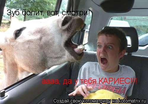 Котоматрица: Зуб болит, вот, смотри! аааа, да у тебя КАРИЕС!!!
