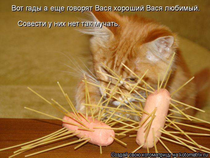Котоматрица: Вот гады а еще говорят Вася хороший Вася любимый. Совести у них нет так мучать.