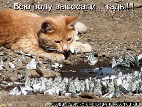 Котоматрица: - Всю воду высосали... гады!!!