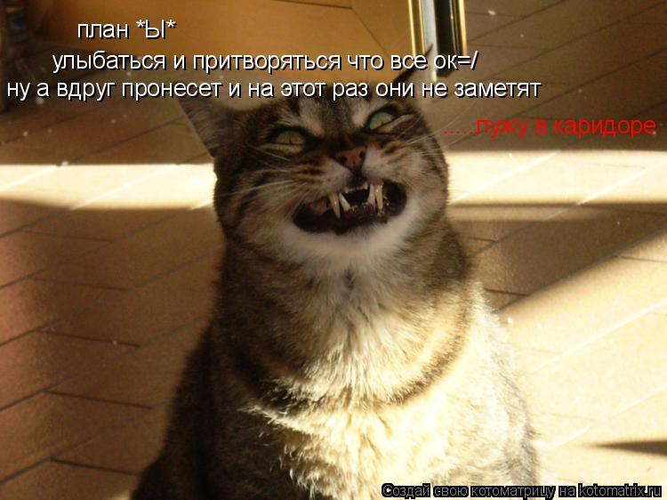 Котоматрица: план *Ы*  улыбаться и притворяться что все ок=/ ну а вдруг пронесет и на этот раз они не заметят  .....лужу в каридоре