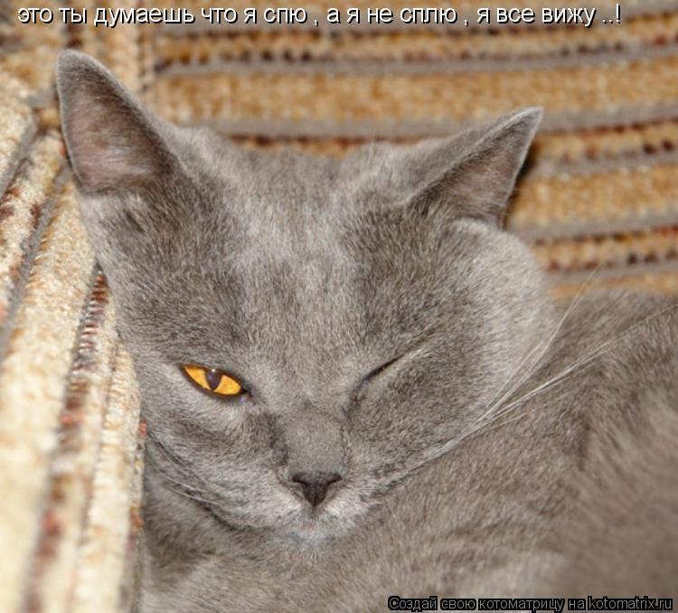 Котоматрица: это ты думаешь что я спю , а я не сплю , я все вижу ..!
