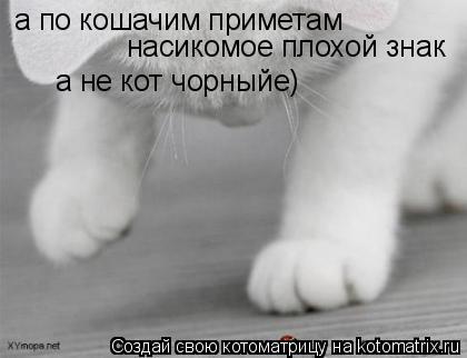 Котоматрица: а по кошачим приметам  насикомое плохой знак  а не кот чорныйе)