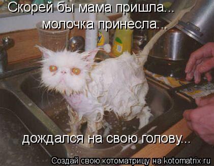 Котоматрица: Скорей бы мама пришла... молочка принесла... дождался на свою голову...