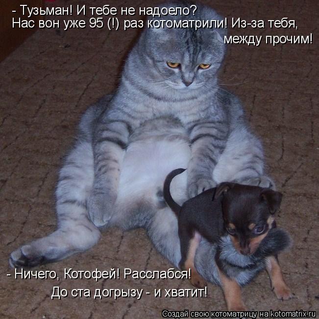 Котоматрица: - Тузьман! И тебе не надоело? Нас вон уже 95 (!) раз котоматрили! Из-за тебя,  между прочим! - Ничего, Котофей! Расслабся!  До ста догрызу - и хватит!