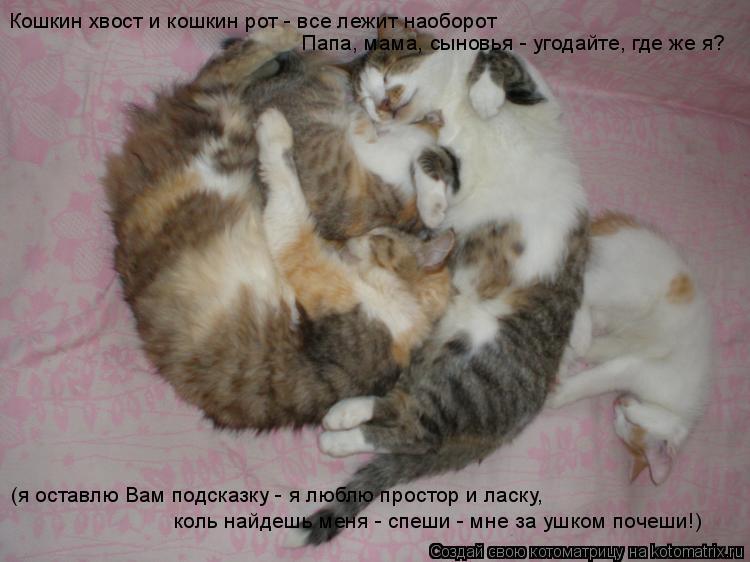 Котоматрица: Кошкин хвост и кошкин рот - все лежит наоборот Папа, мама, сыновья - угодайте, где же я? (я оставлю Вам подсказку - я люблю простор и ласку, коль