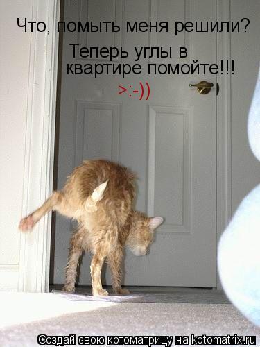 Котоматрица: Что, помыть меня решили? Теперь углы в квартире помойте!!! >:-))