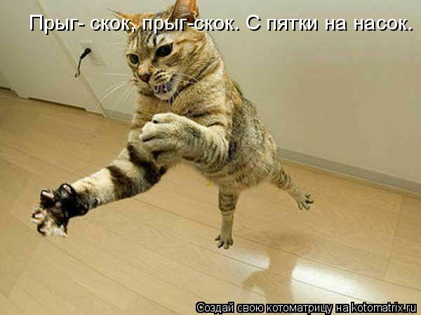Котоматрица: Прыг- скок, прыг-скок. С пятки на насок.