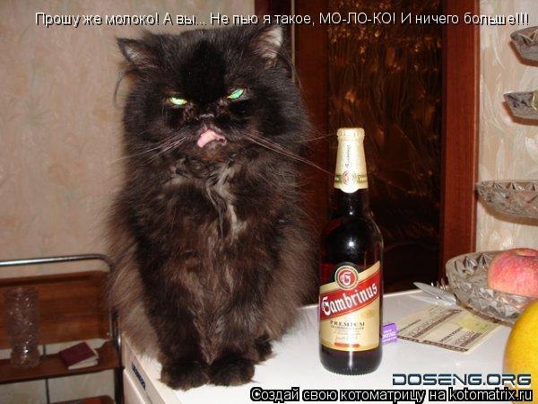 Котоматрица: Прошу же молоко! А вы... Не пью я такое, МО-ЛО-КО! И ничего больше!!!