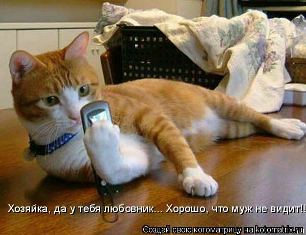 Котоматрица: Хозяйка, да у тебя любовник... Хорошо, что муж не видит!!!