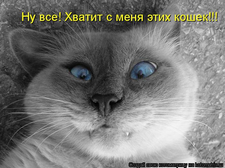 Котоматрица: Ну все! Хватит с меня этих кошек!!!