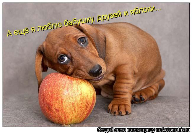 Котоматрица: А ещё я люблю бабушку, друзей и яблоки...