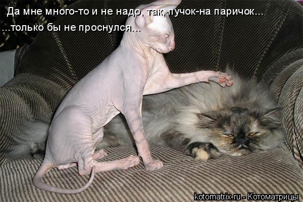 Котоматрица: ...только бы не проснулся... Да мне много-то и не надо, так, пучок-на паричок...