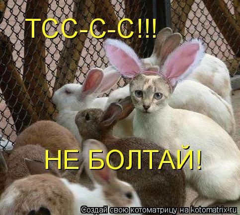 Котоматрица: НЕ БОЛТАЙ! ТСС-С-С!!!