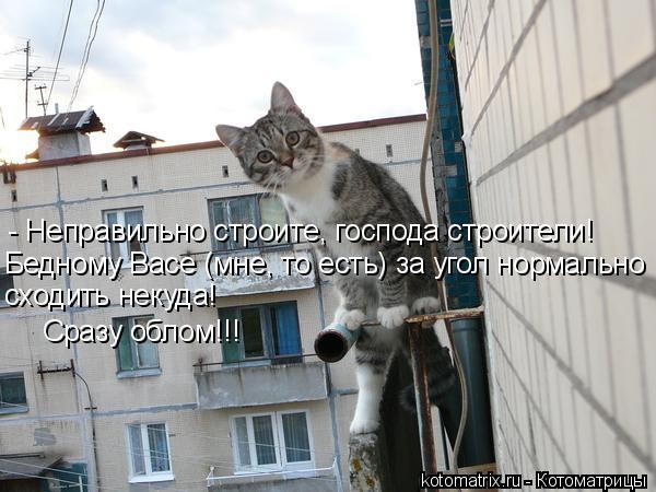 Котоматрица: - Неправильно строите, господа строители! Бедному Васе (мне, то есть) за угол нормально  сходить некуда!  Сразу облом!!!