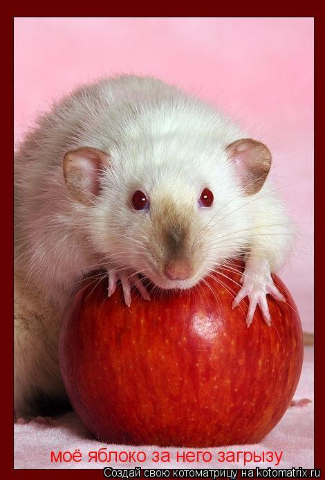 Котоматрица: моё яблоко за него загрызу