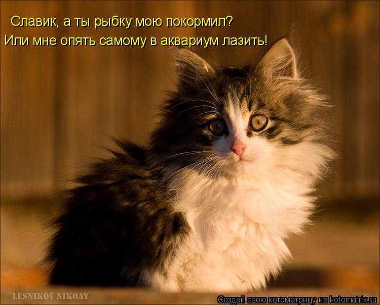 Котоматрица: Славик, а ты рыбку мою покормил? Или мне опять самому в аквариум лазить!