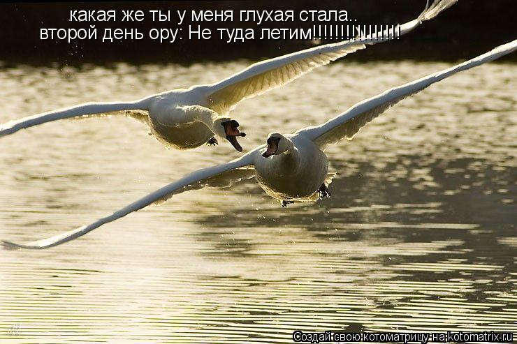 Котоматрица: какая же ты у меня глухая стала.. второй день ору: Не туда летим!!!!!!!!!!!!!!!!
