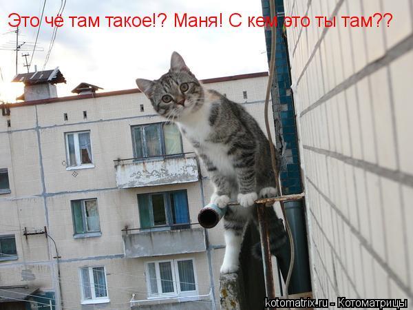 Котоматрица: Это чё там такое!? Маня! С кем это ты там??