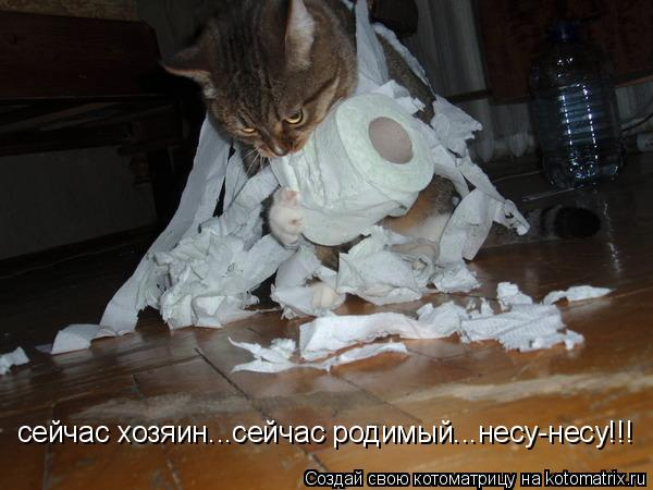 Котоматрица: сейчас хозяин...сейчас родимый...несу-несу!!!