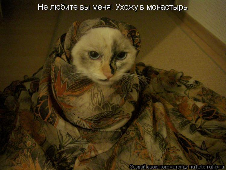 Котоматрица: Не любите вы меня! Ухожу в монастырь