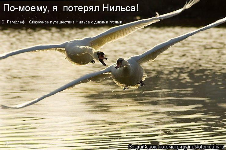 Котоматрица: По-моему, я  потерял Нильса! С. Лагерлеф  «Сказочное путешествие Нильса с дикими гусями»