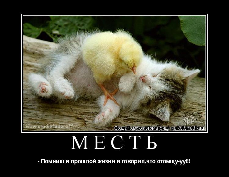 Котоматрица: Месть - Помниш в прошлой жизни я говорил,что отомщу-уу!!!