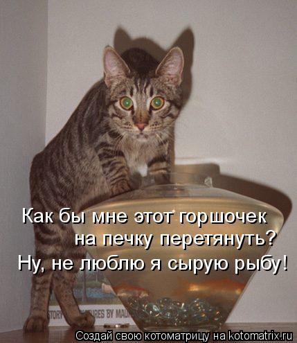 Котоматрица: Как бы мне этот горшочек на печку перетянуть? Ну, не люблю я сырую рыбу!
