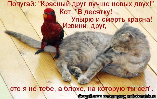 """Котоматрица: Попугай: """"Красный друг лучше новых двух!"""" Кот: """"В десятку!  Упырю и смерть красна! Извини, друг,  это я не тебе, а блохе, на которую ты сел""""."""