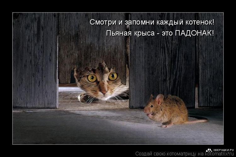 Котоматрица: Смотри и запомни каждый котенок! Пьяная крыса - это ПАДОНАК!
