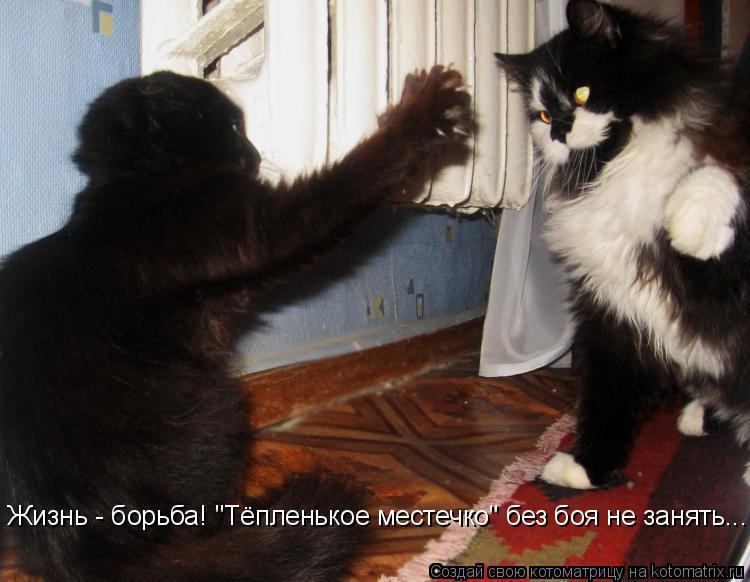 "Котоматрица: Жизнь - борьба! ""Тёпленькое местечко"" без боя не занять..."