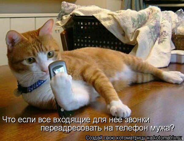 Котоматрица: Что если все входящие для нее звонки  переадресовать на телефон мужа?