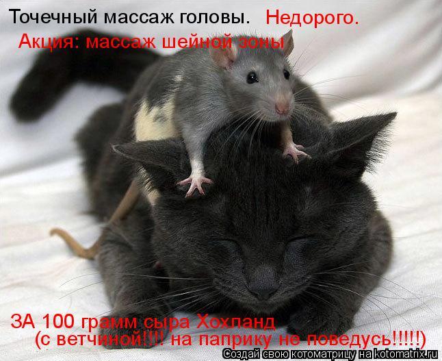 Котоматрица: Точечный массаж головы. Недорого. Акция: массаж шейной зоны ЗА 100 грамм сыра Хохланд (с ветчиной!!!! на паприку не поведусь!!!!!)