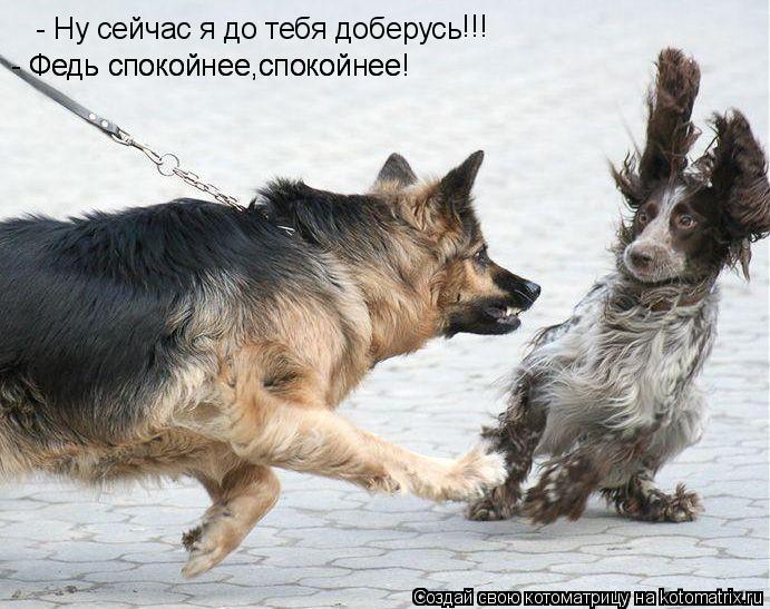 Котоматрица: - Ну сейчас я до тебя доберусь - Федь спокойнее,спокойнее! - Федь спокойнее,спокойнее! !!! !!!