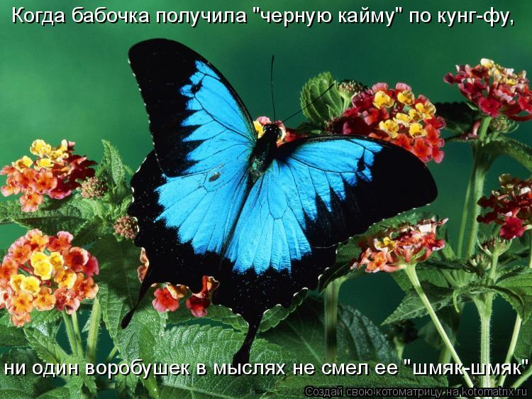 """Котоматрица: Когда бабочка получила """"черную кайму"""" по кунг-фу,  ни один воробушек в мыслях не смел ее """"шмяк-шмяк"""""""