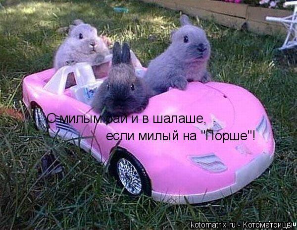 """Котоматрица: С милым рай и в шалаше, если милый на """"Порше""""!"""