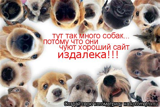 Котоматрица: тут так много собак... потому что они  чуют хороший сайт издалека!!!