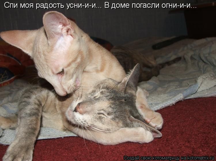 Котоматрица: Спи моя радость усни-и-и... В доме погасли огни-и-и...