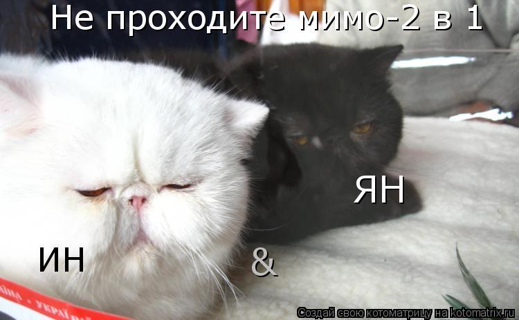 Котоматрица: Не проходите мимо-2 в 1 ИН & ЯН