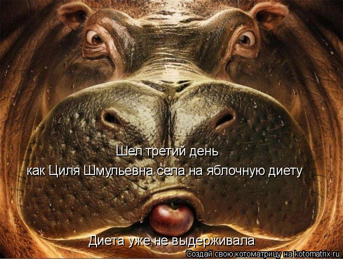 Котоматрица: Шел третий день как Циля Шмульевна села на яблочную диету Диета уже не выдерживала