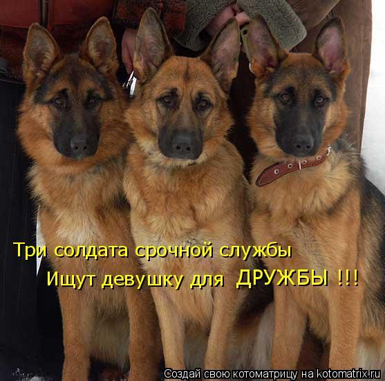 Котоматрица: Три солдата срочной службы Ищут девушку для ДРУЖБЫ !!!